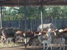 باغ وحش سافاری - _25