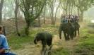 چیانگ مای - پارک Mae Taeng Elephant