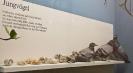 برلین - موزه تاریخ طبیعی هامبولت