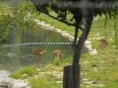 سئول - پارک جنگلی